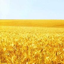 武功县2015年新增千亿斤粮食生产能力建设项目